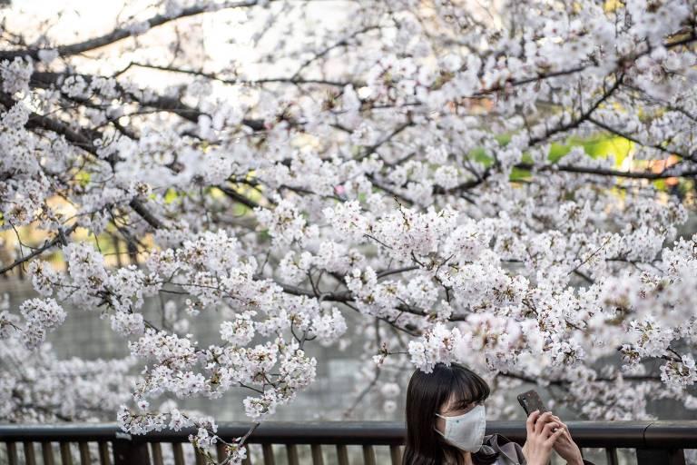 Mulher faz selfie em frente a cerejeira florida no Japão