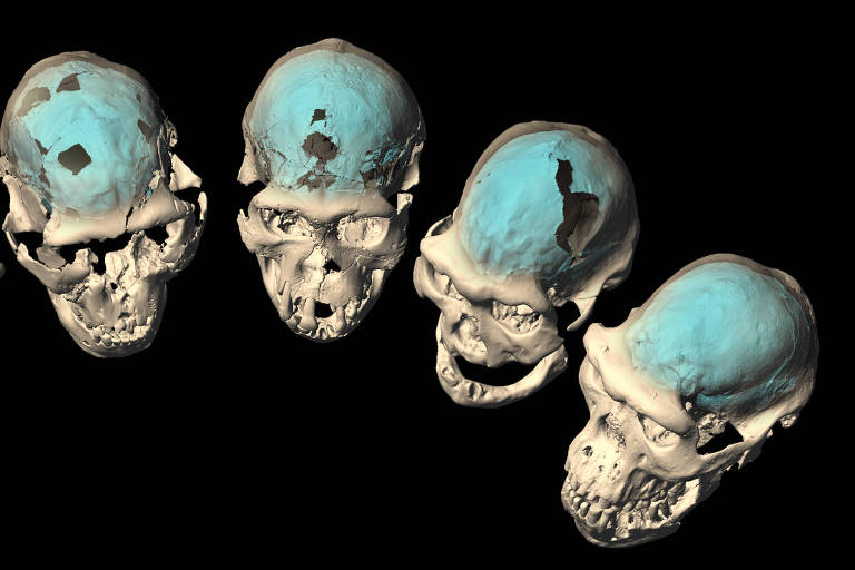 Early Homo skulls from Dmanisi, Georgia (specimens D2280, D2282, D2700, D3444, and D4500) with internal braincase structures revealed by computed tomography and virtual reconstruction.