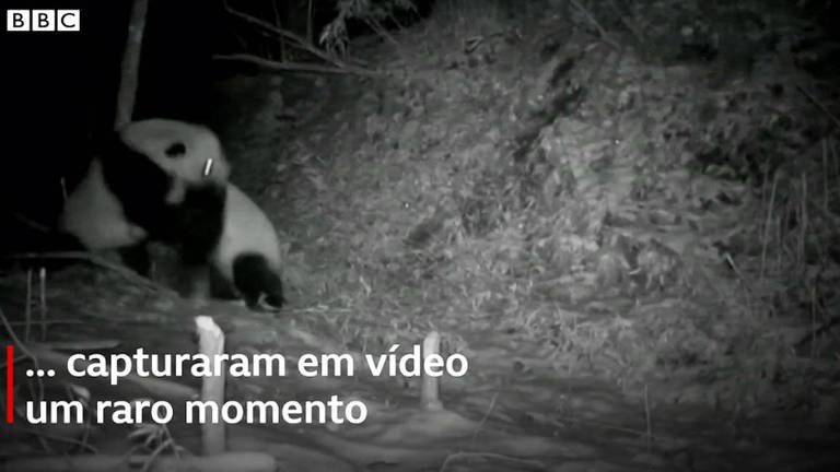 Pandas brigam na China