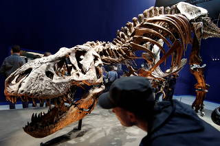 FILE PHOTO: Visitors look at a 67 million year-old skeleton of a Tyrannosaurus Rex dinosaur, named Trix, during the first day of the exhibition