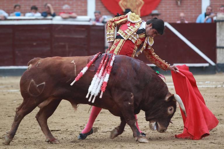 Entenda como funcionam as touradas e como vivem os touros bravos