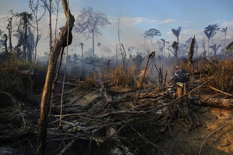 Queimada em área recentemente desmatada para formação de pasto dentro da Terra Indigena Trincheira Bacaja, no Pará