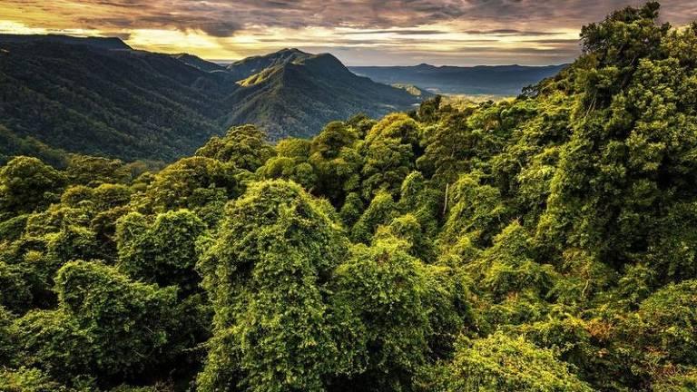 Assim como várias outras criaturas noturnas, os grandes planadores vivem nas florestas tropicais da Austrália