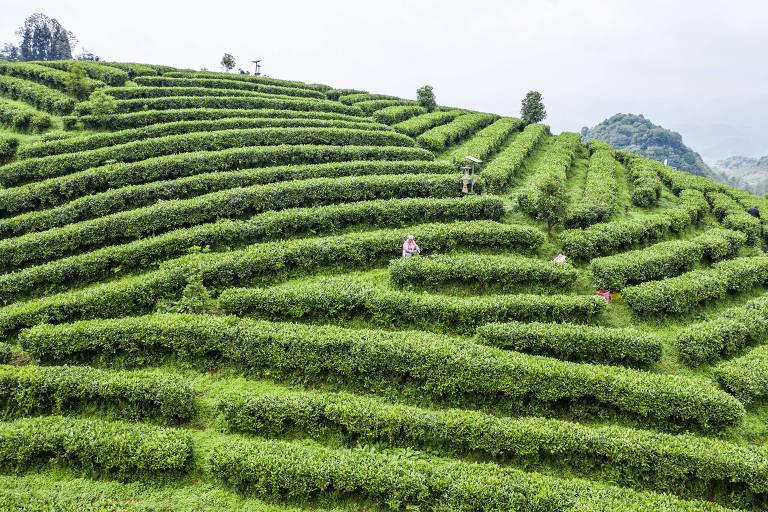 O que dizem as folhas do chá chinês sobre o preço das commodities