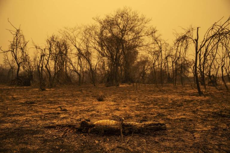 Após cúpula de Biden, vem aí agenda crucial para clima e fome