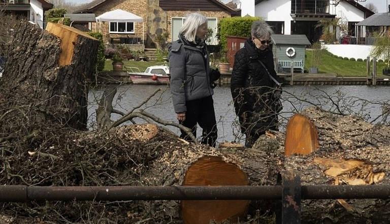Lenhador fantasma já derrubou mais de 50 árvores
