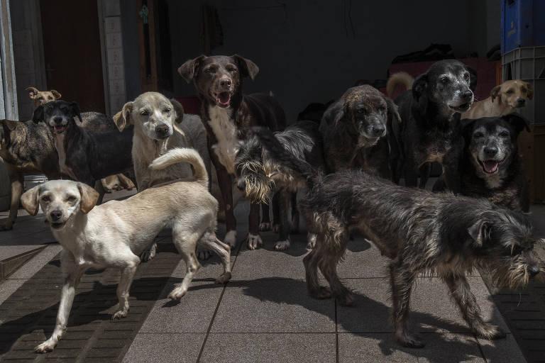 Um em cada quatro novos donos de cães pensa em abandoná-los no Reino Unido