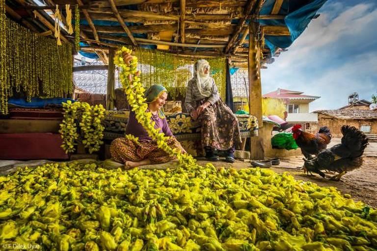 """""""Secagem de flores de quiabo em Tokat, Turquia. As mulheres colhem flores de quiabo do campo e as arrumam em uma corda, então as flores secas caem e o quiabo fica pronto para ser usado no inverno."""""""
