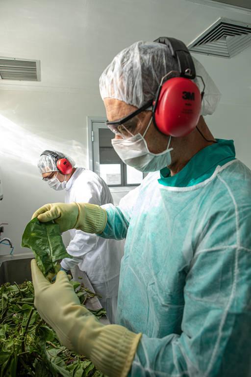 Weleda usa ingredientes orgânicos e biodinâmicos na produção de cosméticos e medicamentos