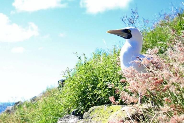 Redonda é a terceira e menos conhecida das ilhas de Antígua e Barbuda