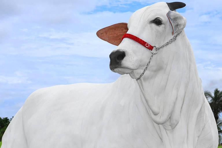 Imagem mostra uma vaca na cor branca, com o céu azul ao fundo