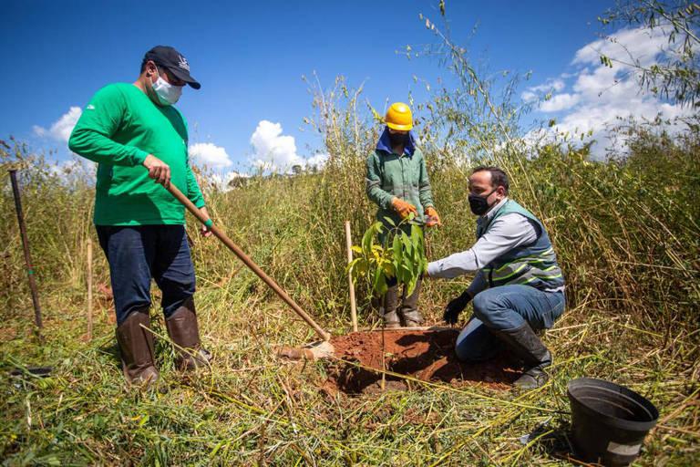 Técnica pode acelerar replantio de árvores em área da lama de Brumadinho (MG)