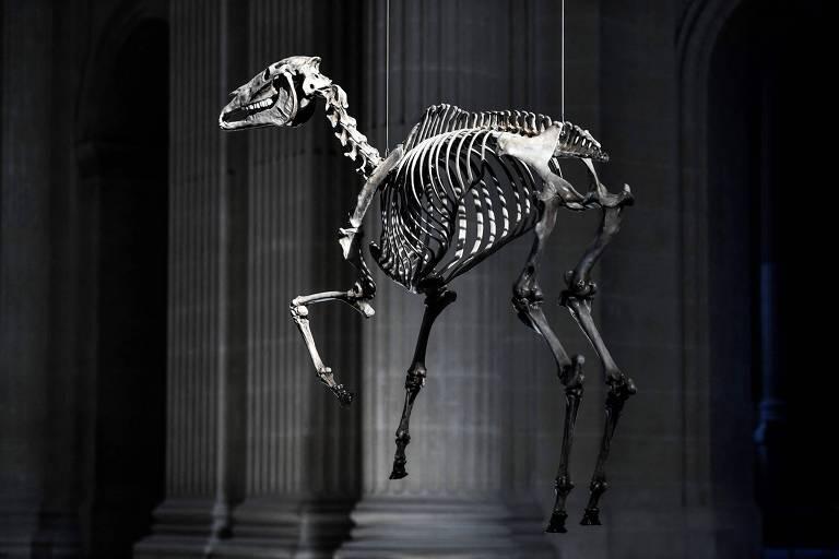 Esqueleto do cavalo de Napoleão em seu túmulo gera polêmica na França
