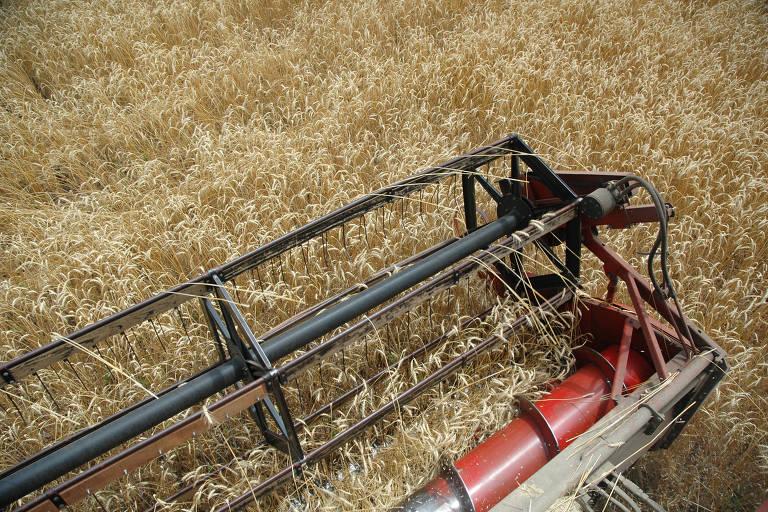 Atraso no plantio de trigo no Paraná preocupa