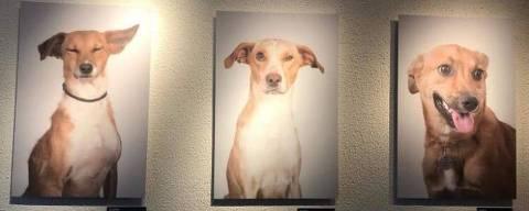 Exposição de pets para adoção em espaço da Lagunitas em SP, em novembro de 2020