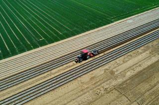 CHINA-HEBEI-LUANZHOU-AGRICULTURE-PEANUT FARM (CN)