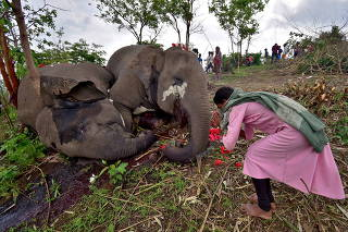 A woman prays next to the carcasses of elephants on the foothills of the Kundoli reserve forest area in Nagaon