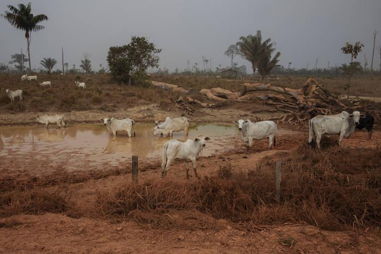 Projeto de lei deixa licenciamento ambiental de mãos atadas e faz boiada de Bolsonaro avançar