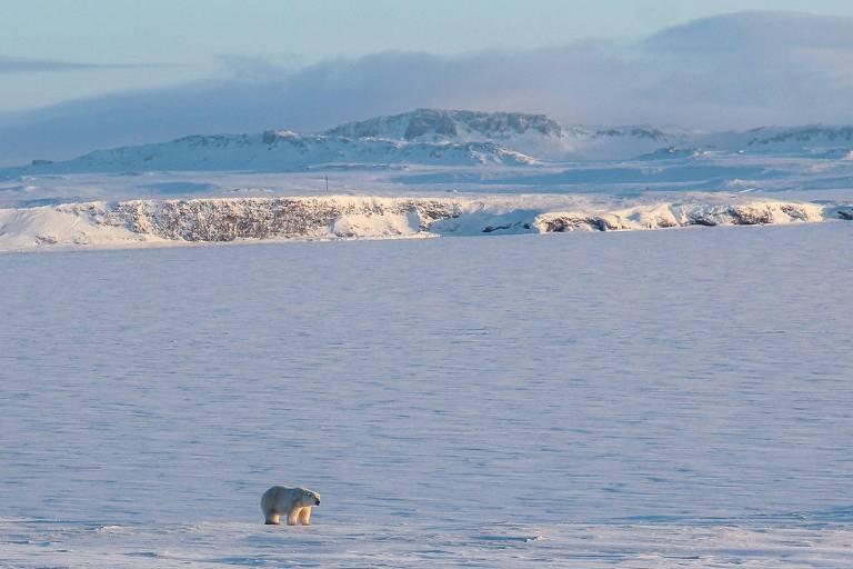 Ártico esquenta três vezes mais rápido do que o planeta como um todo