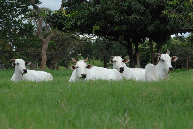 Sob pressão por boas práticas ambientais, pecuária bate recorde