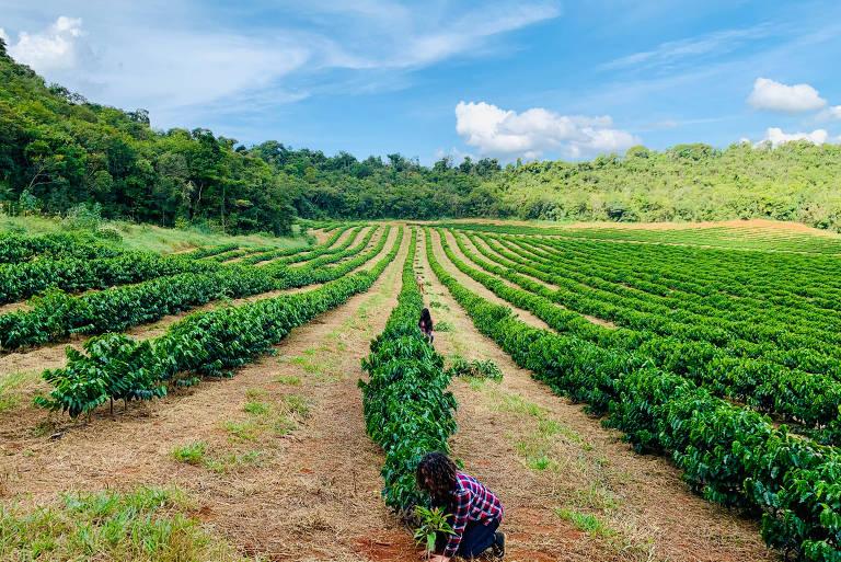 Fazenda Guima Café, em Varjão de Minas (MG), que pratica agricultura regenerativa e fornece para a Nestlé
