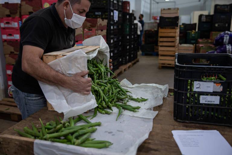 Startup distribuirá 23 mil cestas de alimentos orgânicos a famílias vulneráveis em São Paulo