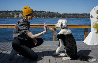 Alexis Devine and her dog, Bunny, at home in Tacoma, Wash., April 14, 2021. (Ruth Fremson/The New York Times)