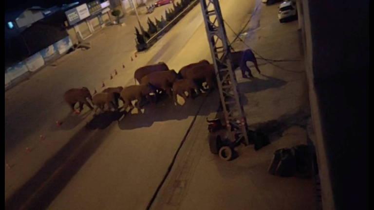 Câmeras de segurança filmam elefantes atravessando as cidades durante a noite na China