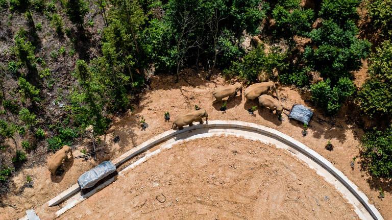 Manada de elefantes deixa rastro de destruição na China