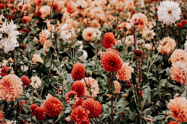 Veja os florais que despertam a sensualidade e revitalizam a intimidade