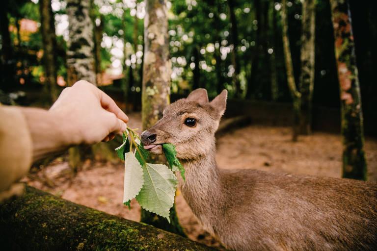 Na Toca da Raposa, em Juquitiba, São Paulo, famílias podem visitar animais silvestres que não estão aptos a retornar à natureza; alguns, vítimas de tráfico