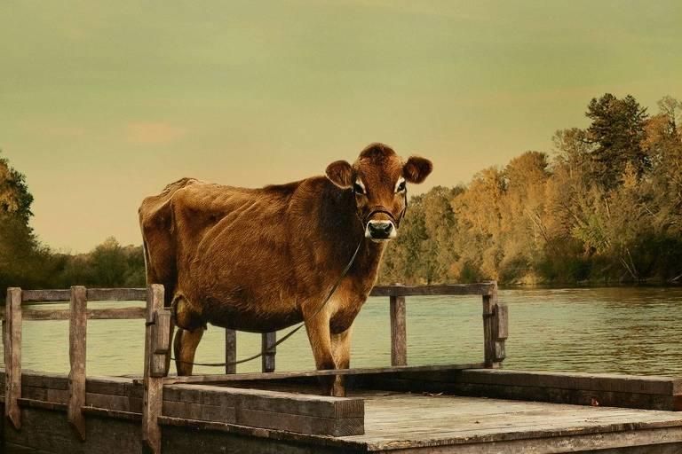 'First Cow', filme sobre vaca que é galinha dos ovos de ouro, estreia nos cinemas de SP