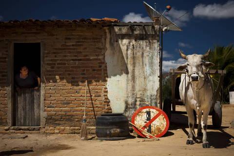 TEIXEIRA, PB - 12 AGOSTO: O coordenador do CEPFS, Jose Dias, posa para foto em casa de farinha, em Teixeira, na Paraiba, em 18 de agosto de 2011. As atividades tiveram inIcio, informalmente, em 1986, com a participacao de estudantes, agricultores e profissionais liberais motivados por ideais de fortalecimento da agricultura familiar. O foco da organizacao e a convivencia sustentavel com a realidade do semiarido, por meio de varios projetos decapacitação e apoio tecnico e financeiro para a populacao da regiao. (Foto: Na Lata)