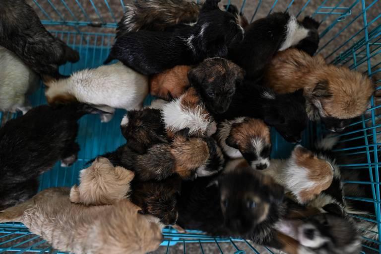 Monge chinês resgata 8.000 cachorros das ruas