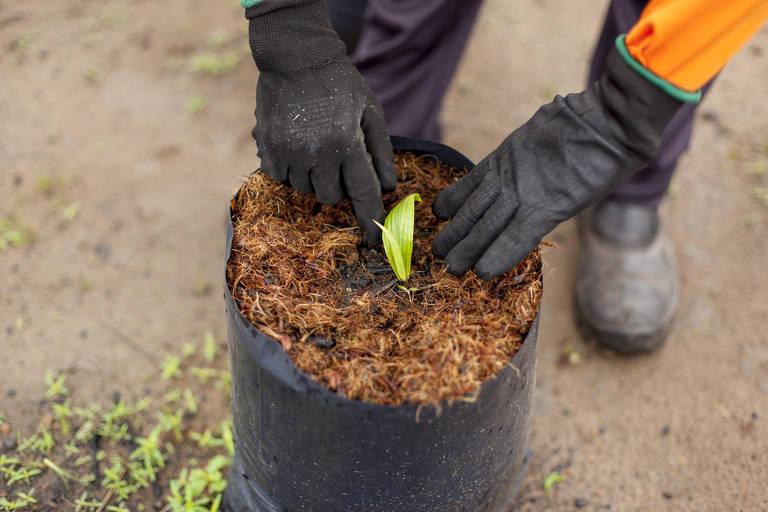 Agropalma quer tornar produção sustentável uma referência no Brasil