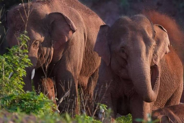Uma manada de elefantes