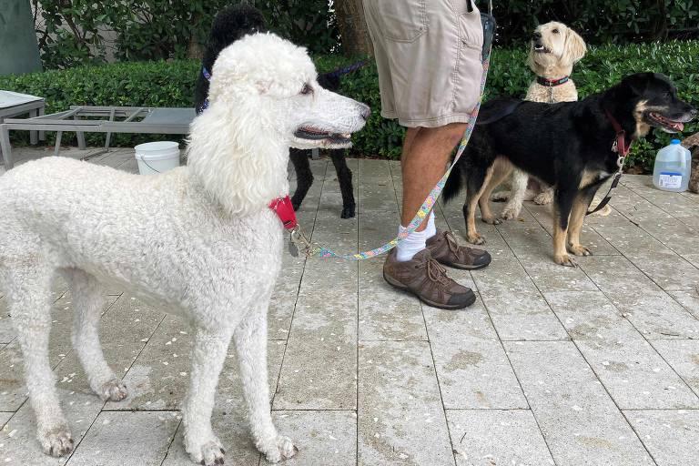 Cães ajudam a confortar familiares de vítimas de desabamento na Flórida
