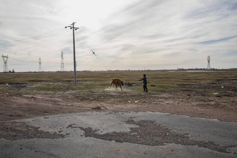O agricultor Wan Bayon leva vaca para pastar em campo ao lado da aldeia Wuridubaga Bulage, na Mongólia Interior, na China