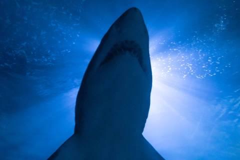Como escapar de um ataque tubarão