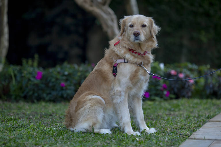 Veja onde dar a vacina antirrábica em cães e gatos na capital paulista
