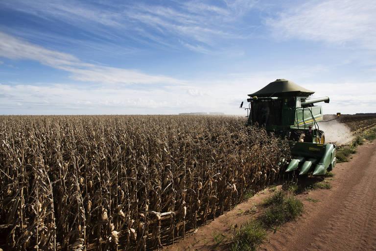 Usinas mantêm produção de etanol em alta, apesar da valorização do milho