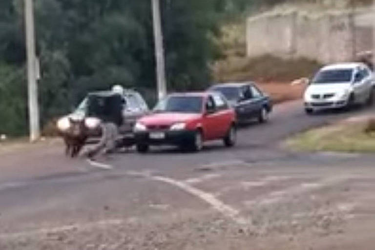 Porco ataca e morde motoqueiro em Franca (SP); veja vídeo