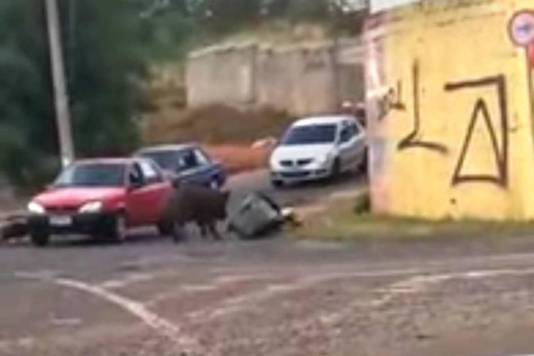 Entregador atacado por javaporco em Franca (SP) passa por tratamento médico e fica sem renda