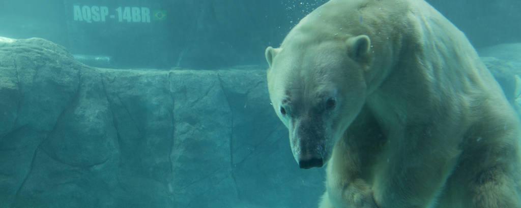 Urso polar do Aquário de São Paulo