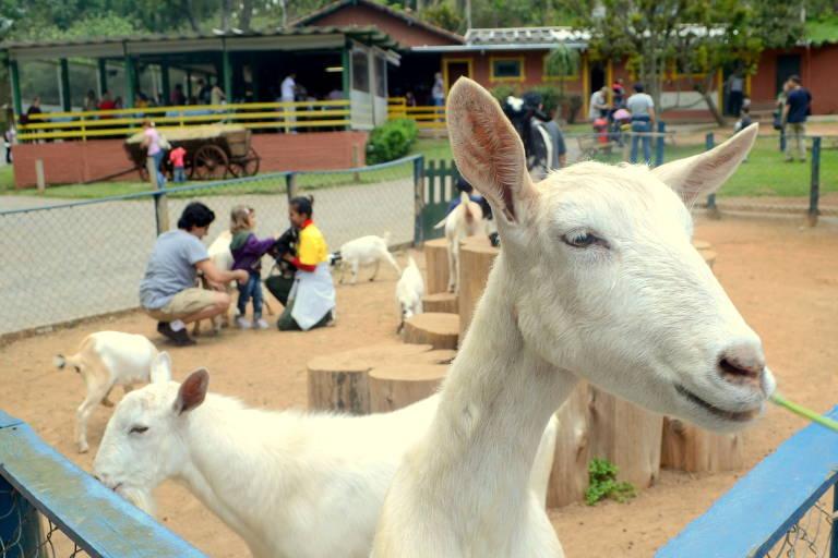 Saiba como visitar animais na Grande SP