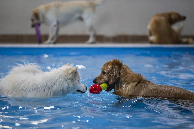 No primeiro plano, dois cachorros brincam em piscina