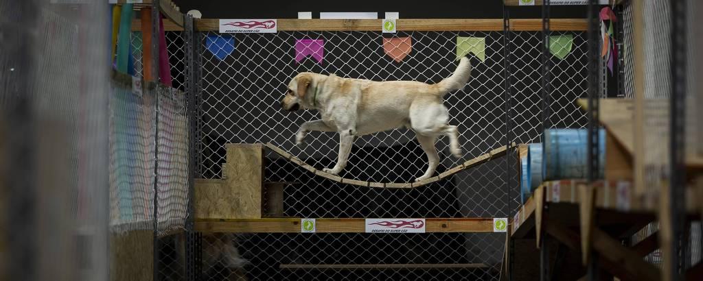 Labrador em brinquedo do Cachorródromo, na zona norte de São Paulo