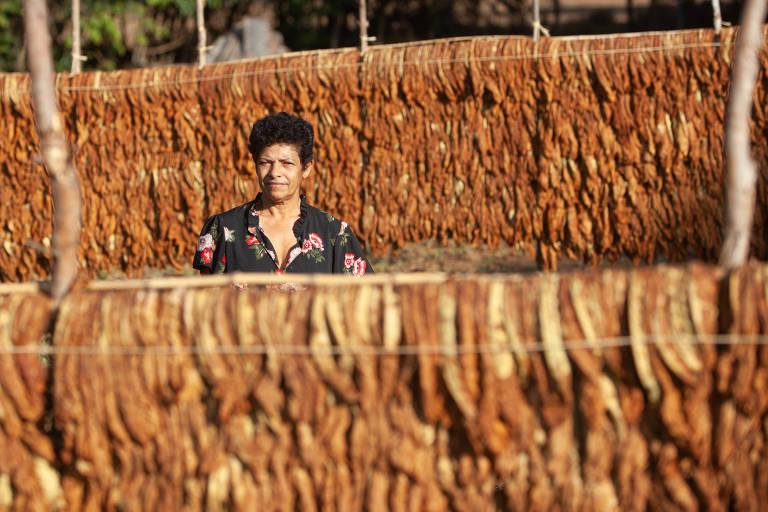 Mulher de cabelo curto e blusa florida entre fileiras de tabaco seco