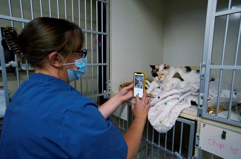 Aplicativo usa escala de careta felina para mostrar se gato está com dor