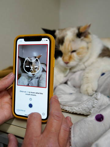 Dr. Liz Ruelle uses a new app called Tably that reads cat's faces and helps her monitor a cat's health at the Wild Rose Cat clinic in Calgary, Alberta, Canada, July 14, 2021.  Photo taken July 14, 2021. REUTERS/Todd Korol ORG XMIT: CAL04